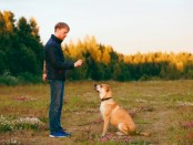 Appointment Apps For Dog Trining