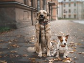 Appointment Apps For Dog Walkers