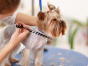 dog grooming online scheduling software